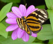 website image and butterfly